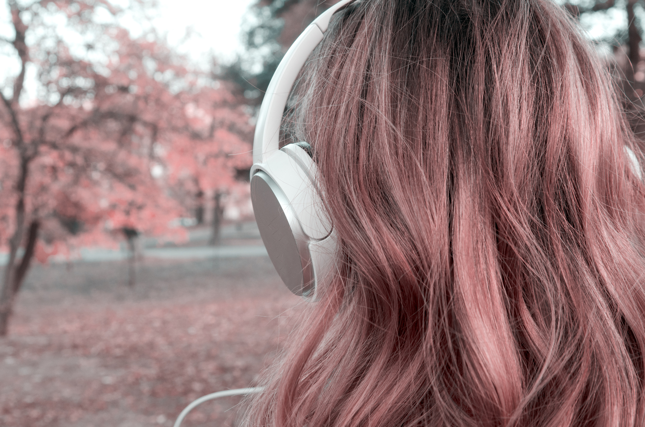 Back of woman head with big white earphones looking autumn tree.Close up hair and music earphone